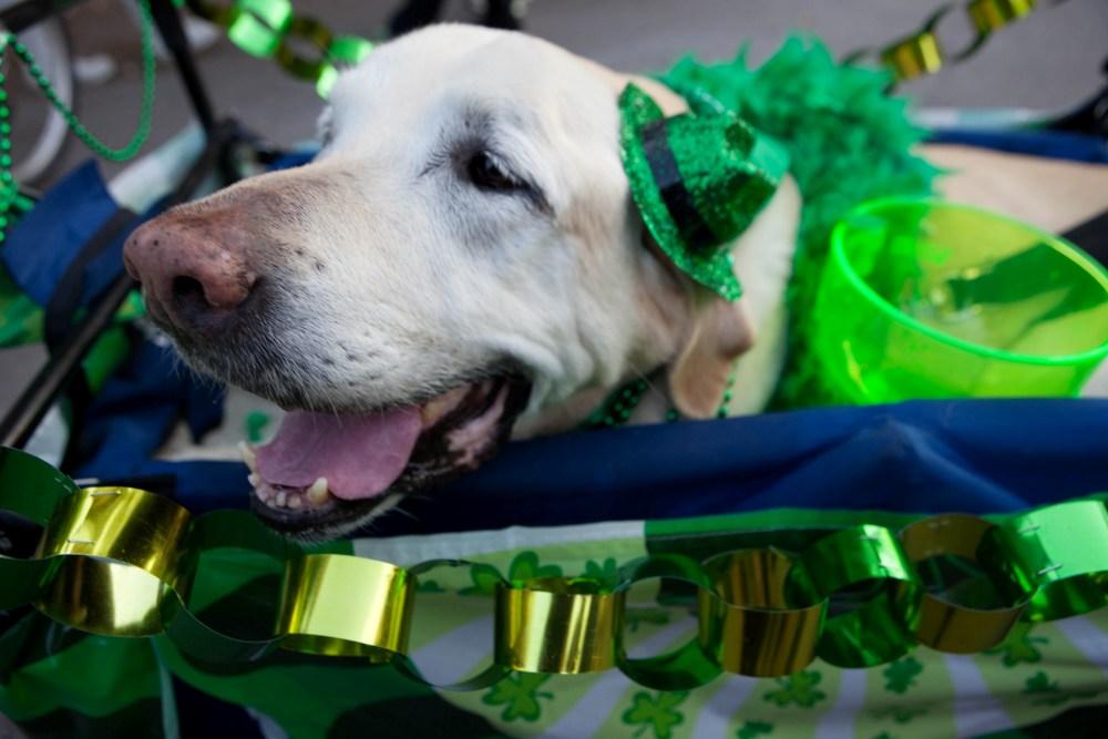 St Patrick S Day Austin 2020 Venue Events Austin