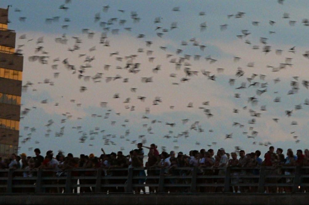 Bat Fest 2019 America S Largest Urban Bat Colony