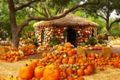 Autumn at the Arboretum Highlights The Wonderful World of Oz