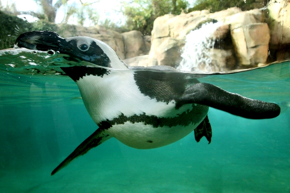 Dallas Zoo Named One Of Usa S Top 10 Zoos Is The Largest